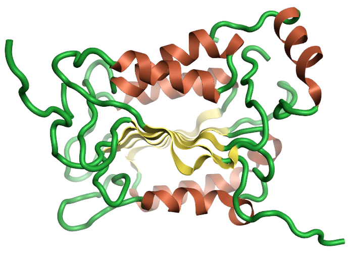 Ribbon for the 1ice Crystal structure of the human caspase