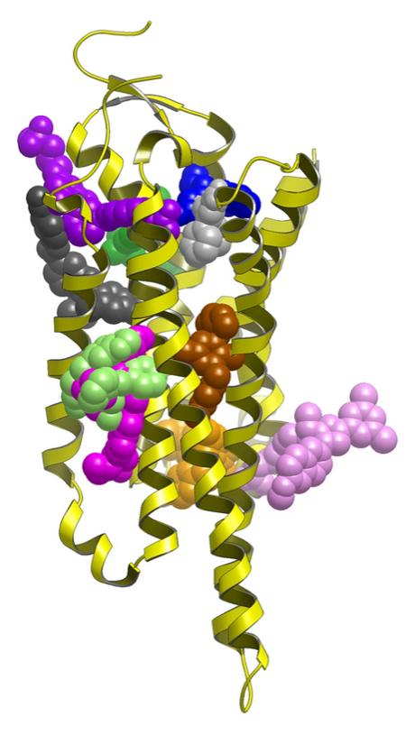 Experimentally validated allosteric sites in GPCRs
