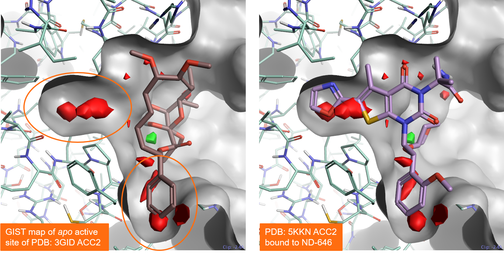 Figure 5. Results of a GIST analysis performed on the apo active site of Acetyl-CoA Carboxylase 2
