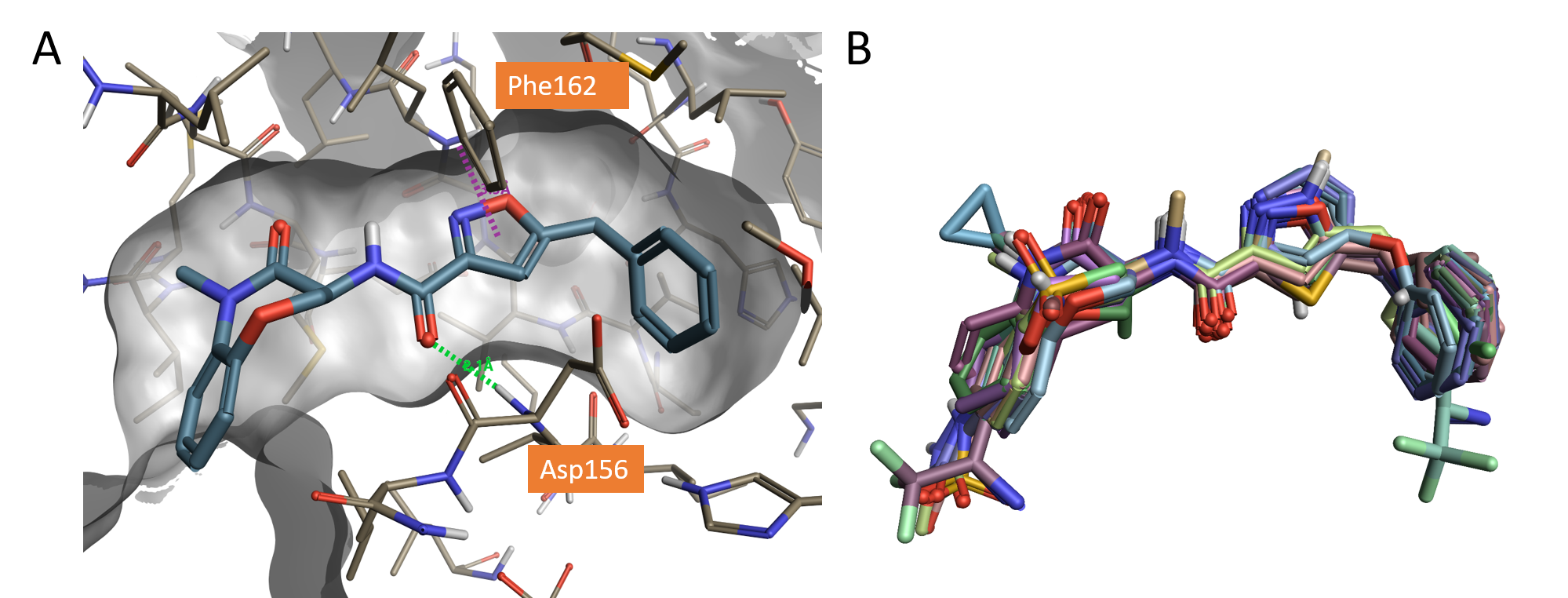 Figure 1_Crystallographic compound GSK'481 and Dataset of molecules aligned to the X-ray structure of GSK'481