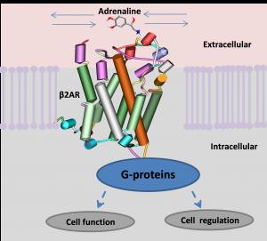 GPCR fig 1