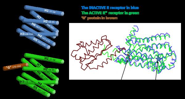GPCR fig 3